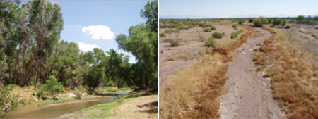 Left: The upper Santa Cruz River in Tumacácori National Park; Right: The upper Santa Cruz River downstream of the effluent-dominated perennial reach